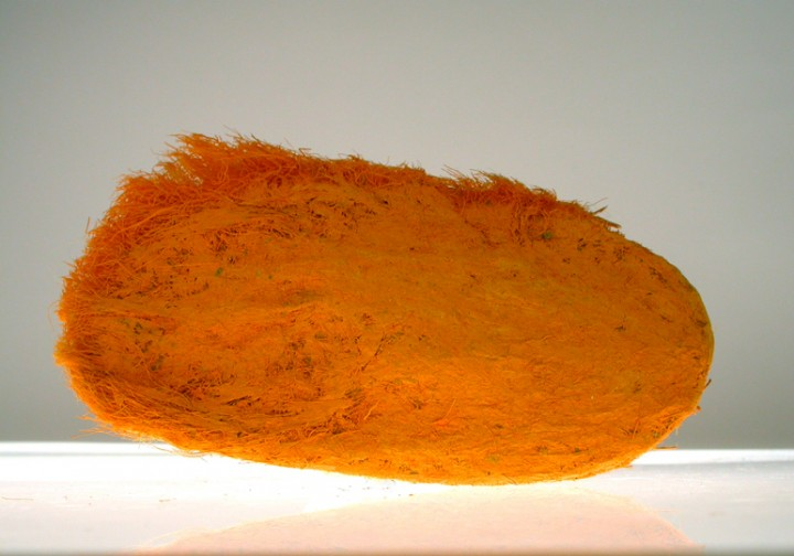 Nicola Ginzel, Mango Element No.18  2002, mango seed, oil pastel, 2 x 4 x .75 inches.